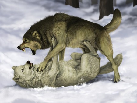 WOLF FIGHT - Other & Animals Background Wallpapers on ...