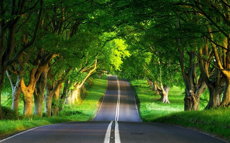 nice day for a ride - road, photography, open, beauty, summer, nature, trees