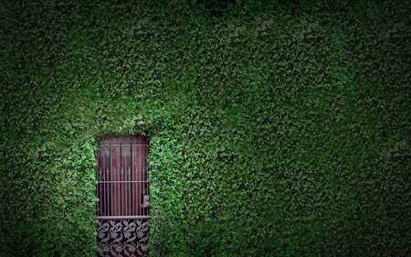 hidden doorway - leaves, green, photography, abstract, ivy, doorway, door, beauty