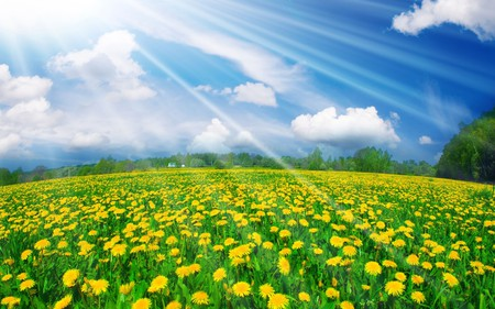 Field Of Flowers - splendor, flowers, spring, beautiful, blue, pretty, tree, view, beauty, yellow, landscape, yellow flowers, grass, field of flowers, green, rays, trees, field, sky, colors, lovely, clouds, sunny, nature, peaceful