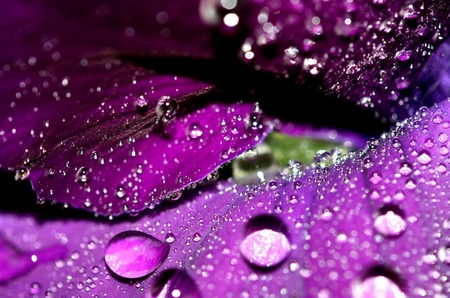 Water Drops - rain, water, flowers, flower, purple, nature, drops