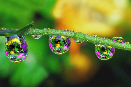 Colorful Waterdrops - rain, water, flowers, flower, nature, drops, brunch