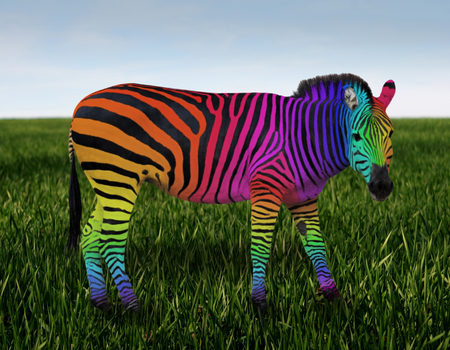 RAINBOW ZEBRA - stripes, rainbow, colorful, zebra