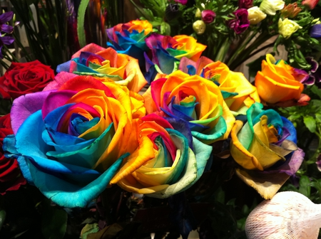 colorful roses flowers amp nature background wallpapers on