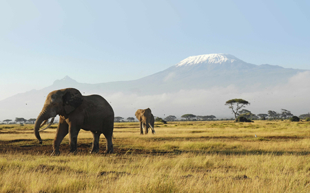 African elephant - mountain, africa, elephant, wildlife