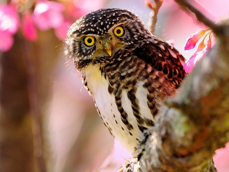 Sweet Owl - owl, animals, bird, owls, sweet, animal, birds