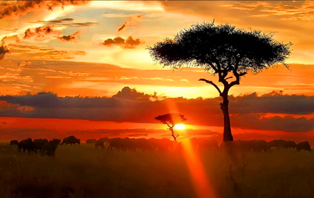 Serengeti eve - africa, clouds, orange, sunset, red, gold, tree