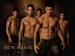 Wolf Pack of Twilight