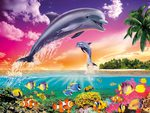 DOLPHINS BEAUTY
