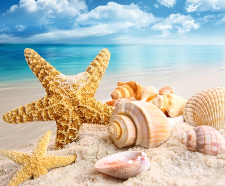 Summer - clouds, starfish, summer time, blue, peaceful, seashells, shell, nice, nature, sand, view, shells, lovely, rays, sands, star, treasure, water, colors, glow, beauty, summer, scallops, sea, beautiful, beach, pretty, shine, sky, ocean