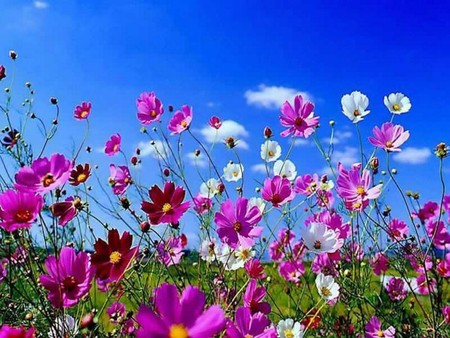 meadow flowers - color, flowers, meadow