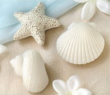 seashells on the beach - sea, summer, seashells, beach