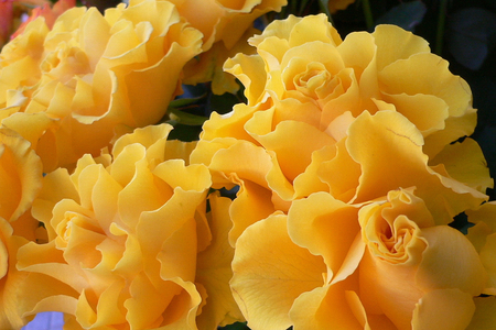 Sunday Friendship Roses - roses, still life, sunday, friendship, bouquet, yellow