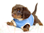 Cute Catel Puppy