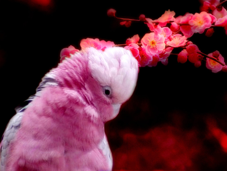 in the pink - flowers, animals, pink, parrot, birds