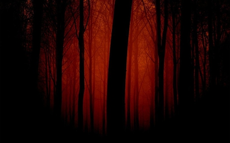 Red and Dark Forest - night, re, dark, forest, black, tall, nature, trees