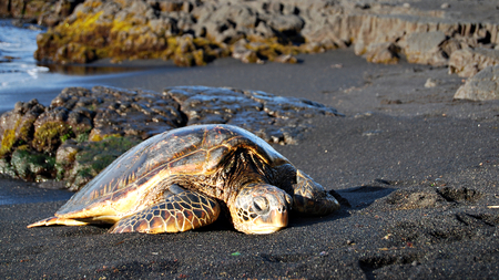 Turtle Sunning on the Beach - turtle, rocks, sea, ocean, beach