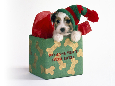 Christmas puppy - Dogs & Animals Background Wallpapers on Desktop ...