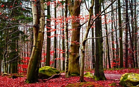 Reddish Forest - light, trees, ray, nature, forest, beauty