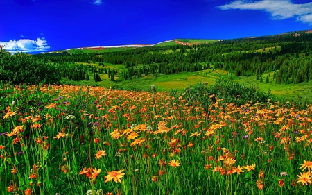 Summer - splendor, flowers, beautiful, blue, view, summer time, beauty, landscape, grass, mountains, field of flowers, summer, trees, colorful, field, sky, colors, lovely, clouds, flowers field, nature, peaceful, hills