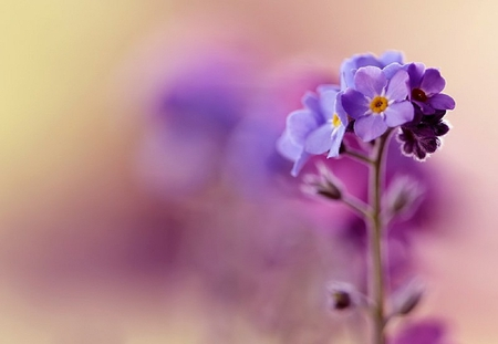 purple flower  flowers  nature background wallpapers on desktop, Beautiful flower