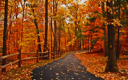 Autumn Road - Forests & Nature Background Wallpapers on Desktop ...
