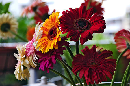 Good Morning ,Friends ! - colours, beautiful, gerbera daisies, flowers