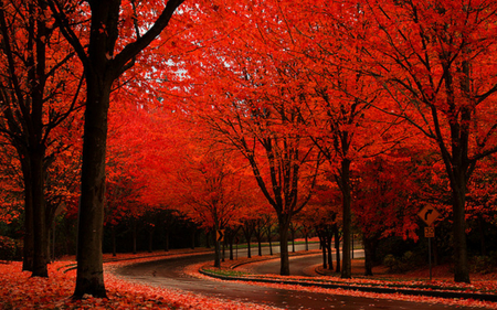 Autumn Colors - splendor, beautiful, road, way, pretty, tree, view, beauty, red autumn, fall, autumn, rain, grass, rainy, forest, red, woods, street, trees, colors, lovely, leaves, autumn colors, nature, peaceful