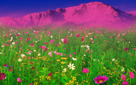 Field Of Flowers - splendor, flowers, amazing, blue, pretty, yellow, purple, purple flowers, yellow flowers, field of flowers, pink flowers, green, sunrise, daisies, paradise, flowers field, peaceful, daisy, spring, beautiful, pink, view, beauty, spring time, magic, landscape, white, grass, wildflowers, mountains, colorful, field, sky, colors, lovely, nature