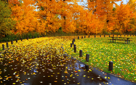 Carpet Of Leaves - walk, peaceful, carpet of leaves, nature, trees, carpet, grass, park, fall, yellow, way, colors, saturating, rainy, autumn colors, colorful, rain, autumn, green, pretty, romance, autumn leaves, shower, romantic, view, lovely, road, leaves, beauty, tree, path, beautiful, splendor, sky, bench