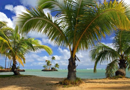 Island - island, palms, clouds, sky, ocean, beach
