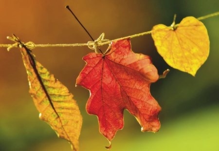 happy autumn - autumn, colorful, leaf, ribbon, tree, nature, leaves