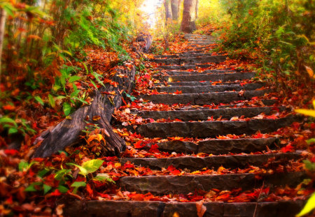 Autumn Leaves - magic, woods, peaceful, stairs, forest, carpet of leaves, nature, leavess, trees, carpet, lovely, grass, fall, way, colors, leaves, stairway, red, autumn colors, beauty, tree, path, autumn, beautiful, pretty, splendor