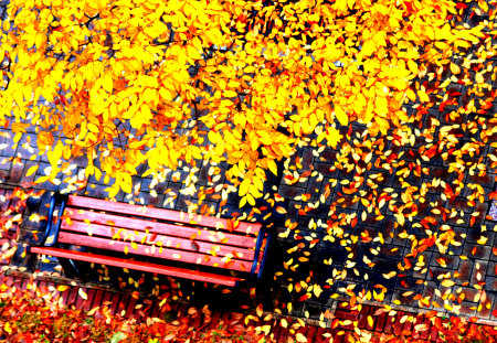 Autumn Leaves - autumn leaves, peaceful, romantic, carpet of leaves, nature, trees, carpet, lovely, road, park, fall, yellow, shade, way, colors, leaves, autumn colors, beauty, tree, path, colorful, fallen, autumn, beautiful, alley, splendor, romance, bench