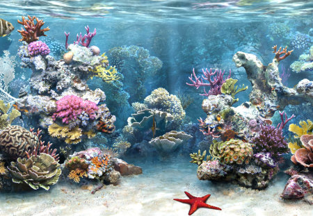 Aquarium - aquarium, water, fish, starfish, coral
