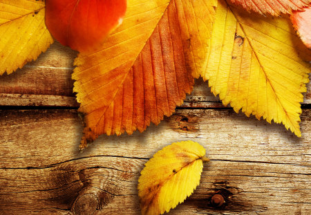 colors of autumn - leaves, nature, fall, autumn, yellow