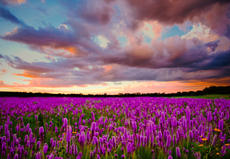 Lavender Field - field, clouds, peaceful, field of lavander, nature, trees, view, lovely, grass, lavender field, lavender, colors, sunset, flowers field, landscape, beauty, purple, colorful, field of flowers, beautiful, flowers, green, splendor, sky
