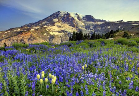 Mountain landsape - landscape, flowers, hill, mountain, nature