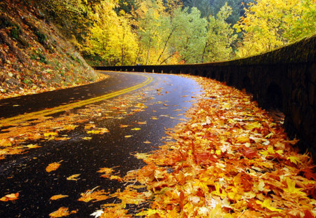 Autumn Road - autumn leaves, peaceful, meandering, nice, forest, mountain, nature, trees, view, lovely, mountains, road, fall, way, colors, leaves, foliage, rainy, cliffs, autumn colors, beauty, tree, falling, highway, rain, autumn, beautiful, pretty, splendor