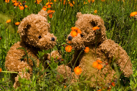 teddy summer - flowers, summer, orange, grass, teddy