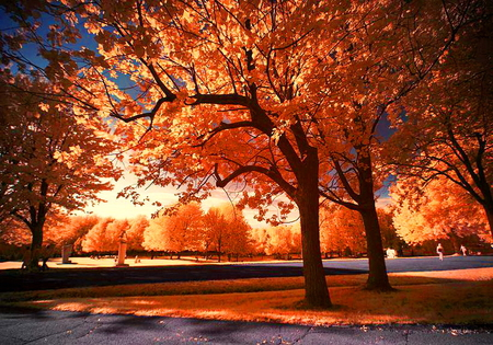 Canadian autumn - leaves, trees, orange, red, gold, autumn, montreal