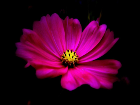 Hot Pink - Flowers & Nature Background Wallpapers on ...