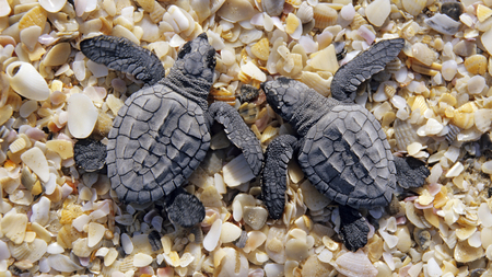 Baby Turtles - nature, beach, stones, turtles