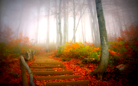 Autumn - splendor, pretty, autumn, forest, trees, foggi, misty, autumn leaves, foggy, park, peaceful, beautiful, way, mist, tree, path, view, beauty, magic, fall, landscape, stairs, grass, carpet of leaves, fog, red, woods, colorful, lovely, carpet, mornig, autumn colors, leaves, nature