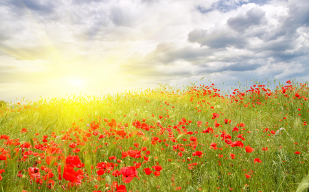 Poppies Field - splendor, flowers, beautiful, red flowers, pretty, view, summer time, beauty, sunrays, landscape, poppy, grass, red, field of flowers, poppies, green, summer, rays, poppies field, colorful, field, sky, colors, lovely, sunlight, clouds, flowers field, sunny, nature, sun, peaceful
