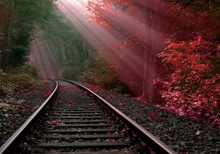 Burning bush - tracks, rail, hot, red, forest, bush