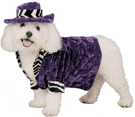 PIMP HALLOWEEN COSTUME - dog, purple, halloween, costume, cute
