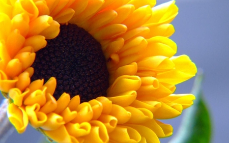 Decorative-sunflower - sunflower, 3d, yellow, flower