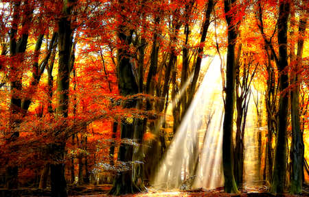 Autumn - splendor, beautiful, pretty, view, beauty, fall, sunrays, autumn, magic, grass, forest, woods, rays, colors, lovely, sunlight, leaves, autumn colors, autumn leaves, nature, sun, peaceful