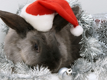 Christmas bunny - hat, bunny, santa, holiday, christmas, animal